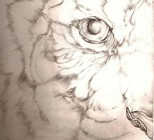 Eye of the Tiger by Lyrebird