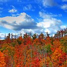 Brilliance of Fall by Jason Vickers