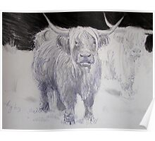 Highland Cattle Drawing Poster