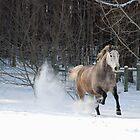 Running Through the Snow by Katie Clark