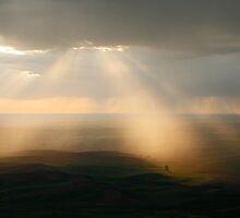 Rays by Olga Zvereva