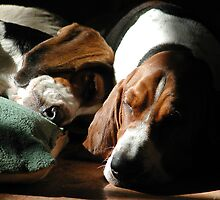 Sleeping Hounds by nosajnybor