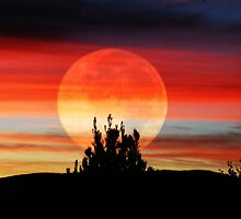 Moonscape Sunset by Winona Sharp