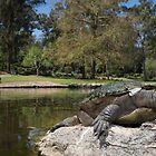 Brisbane River turtle by Stewart Macdonald
