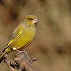 Greenfinch - II by Peter Wiggerman