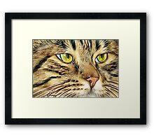 Tabby cat Framed Print
