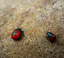 Little & Large  (jewelled bug series) by Samantha  Goode