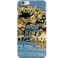 Raccoon In The Oyster Beds iPhone Case/Skin
