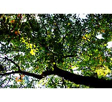 a green life Photographic Print