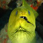 Green Moray Needs Jaw Alignment by George Cathcart