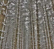 Snow Scenes - HDR Series - Forest Lane by Joe Thill