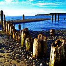 Picnic Point Pilings 2 by Tamara Valjean