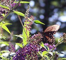 Butterfly Beauty 3 by Marilyn Jones