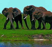 Elephants, Chobe National Park, Botswana by vadim19