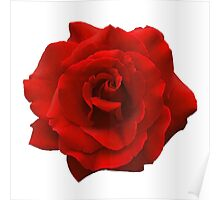 Perfectly Sexy Beautiful Red Rose, Rock this!! Poster