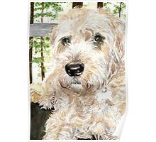 Katie the West Highland White Terrier Poster