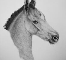 """""""Precious Little One"""" - Marwari Colt by SD 2010 Photography & Equine Art Creations"""