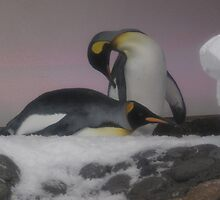 Melbourne Aquarium - King Penguins by skyhorse