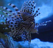Melbourne Aquarium - Lionfish by skyhorse