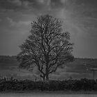 Tree - Mono by Glen Allen