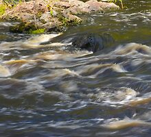 Swift Water by Imagery