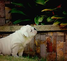 ~Natural Observer! by a-m .