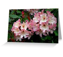 A Perfect Spring Rhododendron Greeting Card