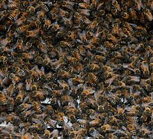 What's good for the hive is good for the bee by oneline