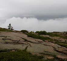On top of Cadillac Mountain by Denise Goldberg