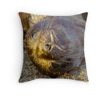 Galapagos Newborn Sea Lion Throw Pillow