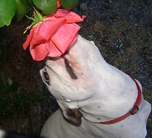Stop and smell the Roses... by tayja