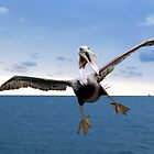 Crazy Pelican by Allison Lane
