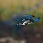 Kingfisher Dive by David Friederich