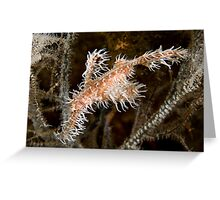 Ornate Ghost Pipefish Greeting Card