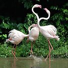 Fiesty Flamingo's by Michelle *