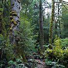 Beech forest walk by Vicki Moritz