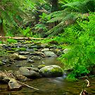 Barham River by Alex Stojan