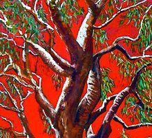 Kakadu Dreaming by Susie a'Beckett