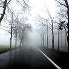Foggy Morning by jack8