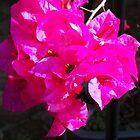 Pink Bogan by aldemore
