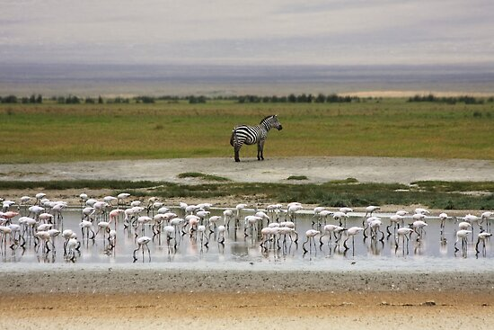 Ngorongoro Crater Scene by Nickolay Stanev
