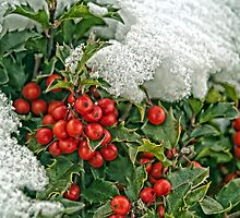 Snow Berries by Gaby Swanson  Photography
