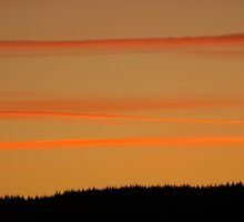 Orange Ribbons in the Sky by Abigail Allardyce