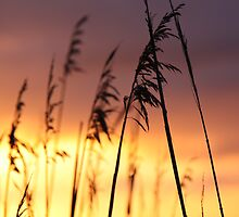 evening breeze by Patricia Gibson