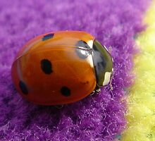 Ladybird by jack8