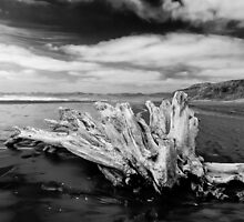 Driftwood, New Zealand by Norman Repacholi