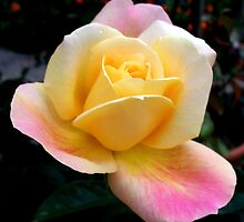 Pure beauty by daffodil