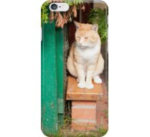 stray waif red cat sitting iPhone Case/Skin