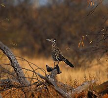 ROADRUNNER by kotybear