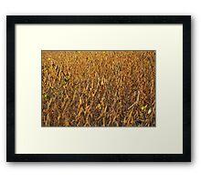 Soyfield Series - Field Focus Framed Print